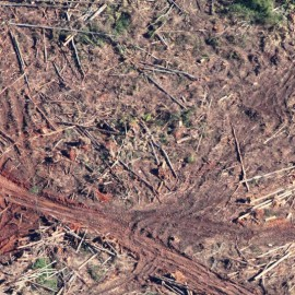 Logging Australia's native forests