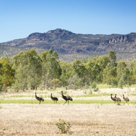 Grampians National Park from Shutterstock