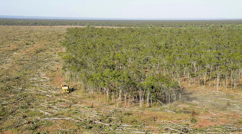 Tree clearing Cape York.
