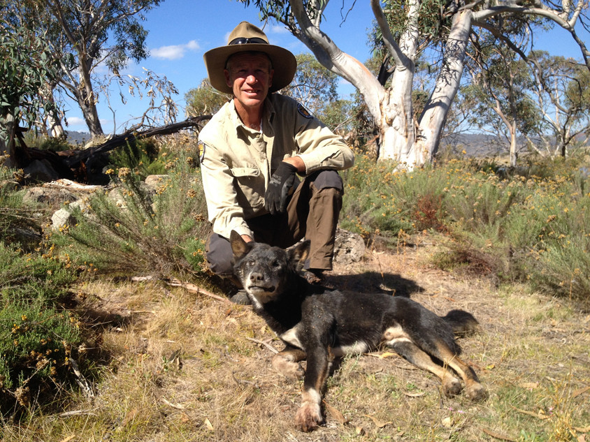 Taste Of The Wild Dog Food Australia