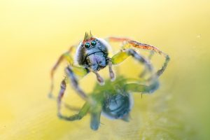 Emily Williams reflecting spider