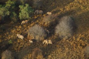 Elephants from above.